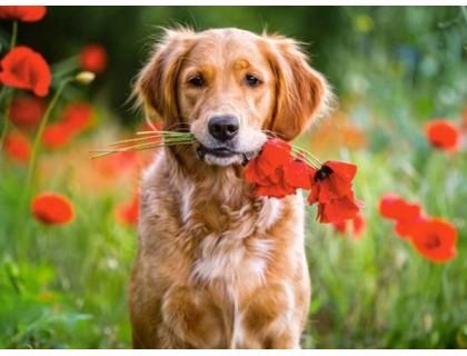 Купить Алмазная вышивка 40 х 30 см на подрамнике Самый верный друг собака (арт. TN684)