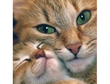 Купить DIY Алмазная вышивка 30 х 30 см на подрамнике Мама кошка (арт. TN814)