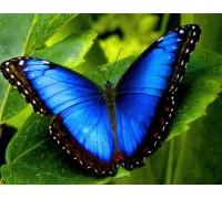 Алмазная вышивка 40 х 50 см на подрамнике Красота бабочки Морфо (арт. TN861)