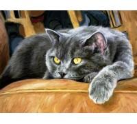 DIY Алмазная вышивка 40 х 30 см на подрамнике Сонный кот (арт. TN921)