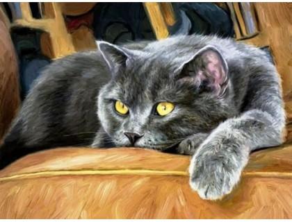 Купить DIY Алмазная вышивка 40 х 30 см на подрамнике Сонный кот (арт. TN921)