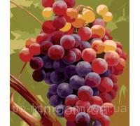 Рисование по номерам Идейка MG1124 Гроздь винограда 40 х 50 см