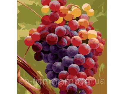 Купить Рисование по номерам Идейка MG1124 Гроздь винограда 40 х 50 см