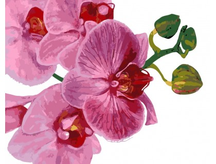 Купить Картина по номерам ArtStory Цветок орхидеи AS0124 40 х 50 см