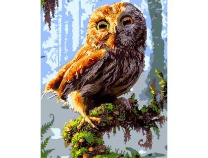 Купить Картина по номерам ArtStory  Милый совёнок AS0054 40 х 50 см