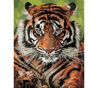 Картина по номерам ArtStory Сильный тигр AS0393 40 х 50 см